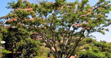 Que Garden Đà Lạt – khu vườn thơ mộng dành cho những ai mộng mơ
