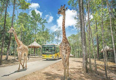 Ngắm thú hoang dã đặc sắc tại vườn quốc gia Vinpearl Safari Phú Quốc